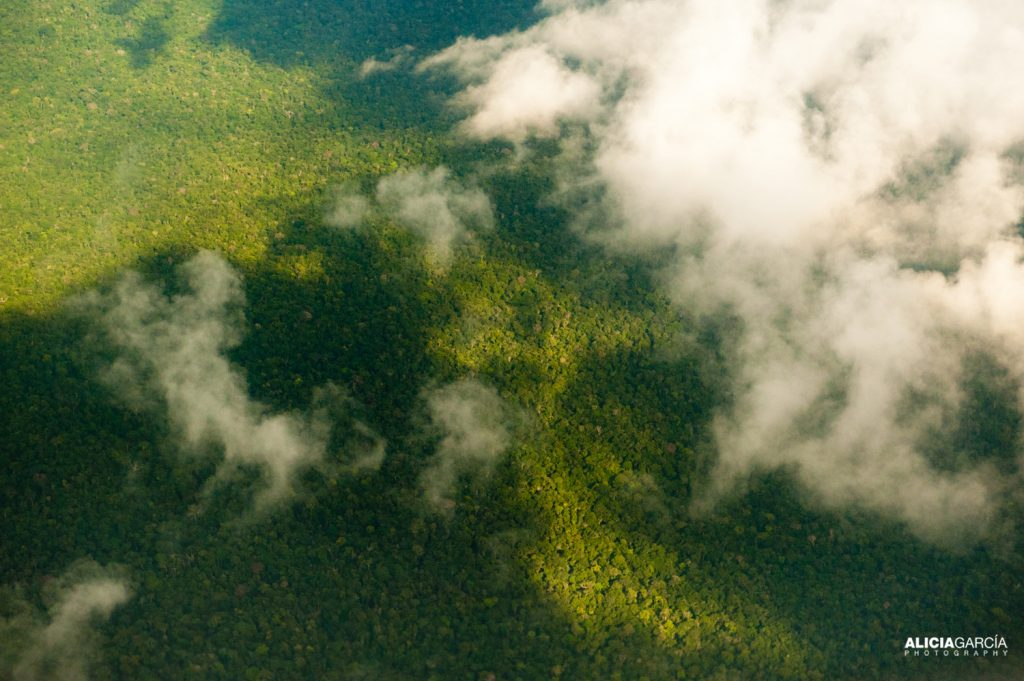 Vista aerea del Amazonas, Zona Colombiana